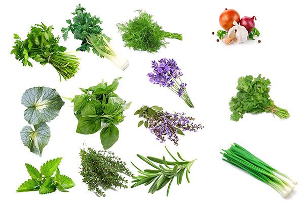 Các loại rau gia vị phổ biến tại Việt Nam