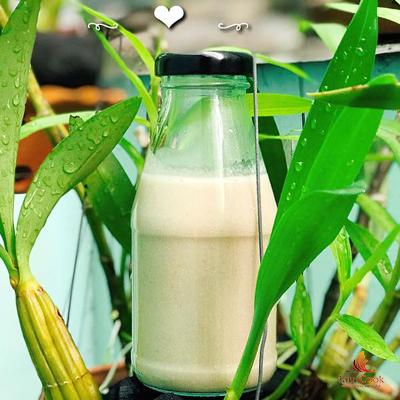 sữa đậu lăng quinoa nước cốt dừa